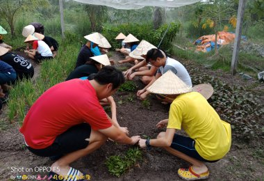 Amazing Farming Time with Cu Chi Tunnels in ho chi minh city